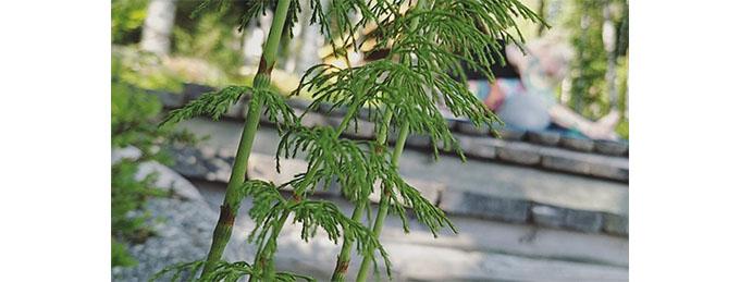 Kesäkuussa meditoidaan Yogobenkanssa