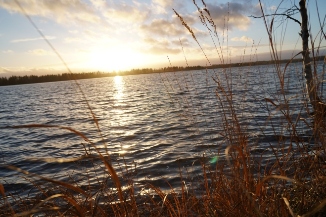 järvi6.JPG